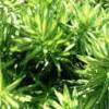 シリーズ第2章<br />植物におけるRNAサイレンシング